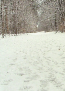 Picture of footprints in the snow on a forest trail in winter.