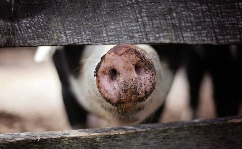 Does God Care About Factory Farms?