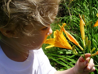 A little girl smelling a yellow lily